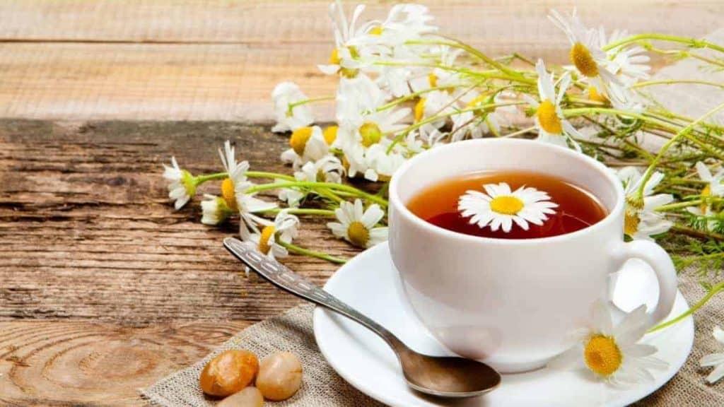 trà cúc ngân hoa