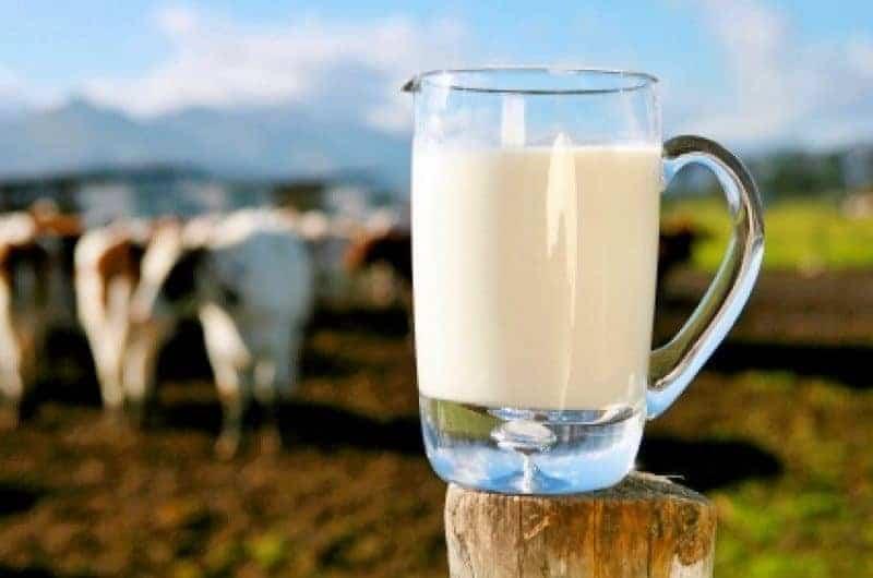 giảm cân với sữa tươi